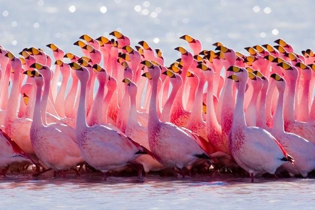 1001 thắc mắc: Hồ Hillier nằm ở đâu, vì sao nước có màu hồng 'ma quái'? ảnh 3