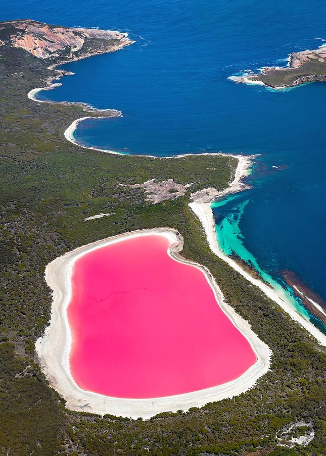 1001 thắc mắc: Hồ Hillier nằm ở đâu, vì sao nước có màu hồng 'ma quái'? ảnh 1