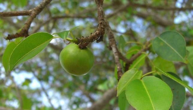 1001 thắc mắc: Loại cây nào chứa 'nọc độc nhện' gây đau rát vô cùng? ảnh 1