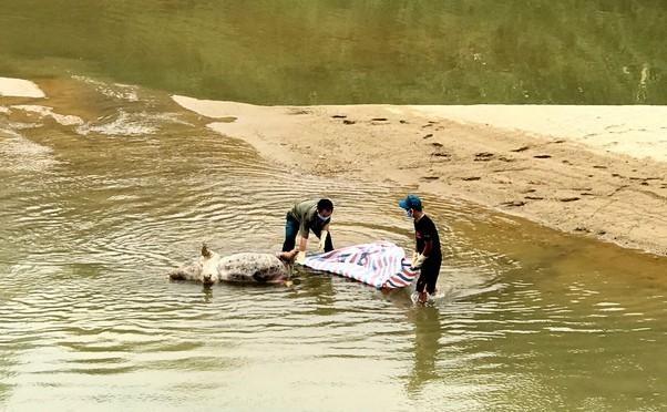Lén lút vứt xác lợn xuống sông giữa tâm dịch tả phức tạp ảnh 2