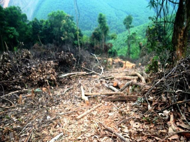 Truy tìm kẻ gian chặt phá 2.500m2 diện tích rừng của người dân ảnh 4