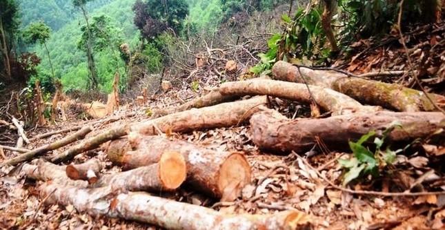 Truy tìm kẻ gian chặt phá 2.500m2 diện tích rừng của người dân ảnh 5