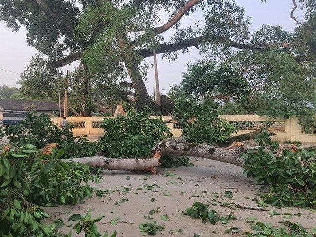 Nhìn gần cây đa hơn 300 tuổi gãy đổ làm bị thương bốn học sinh ở Nghệ An ảnh 8