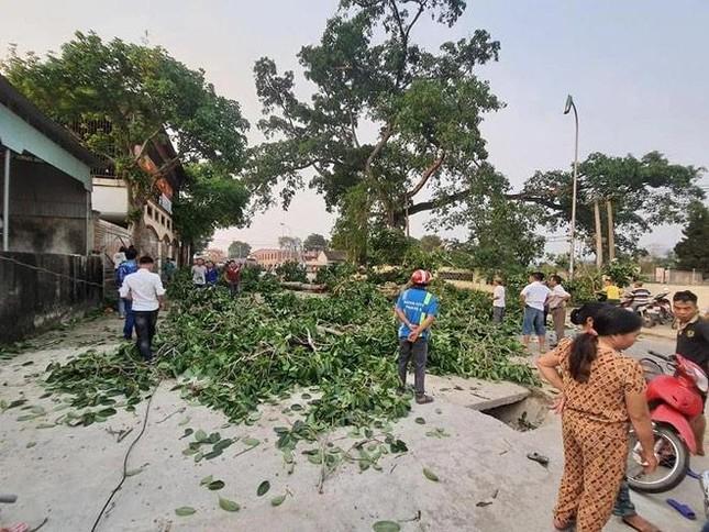 Nhìn gần cây đa hơn 300 tuổi gãy đổ làm bị thương bốn học sinh ở Nghệ An ảnh 6
