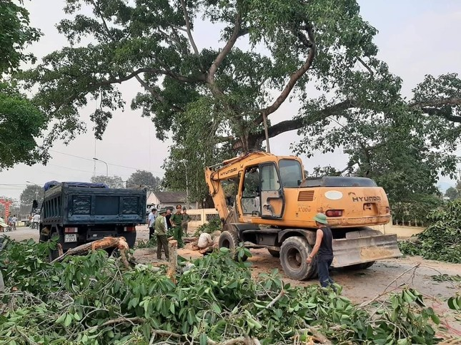 Nhìn gần cây đa hơn 300 tuổi gãy đổ làm bị thương bốn học sinh ở Nghệ An ảnh 7