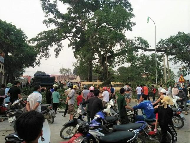 Tin mới vụ cây đa hơn 300 tuổi ở Nghệ An gãy đổ làm bốn học sinh bị thương ảnh 2