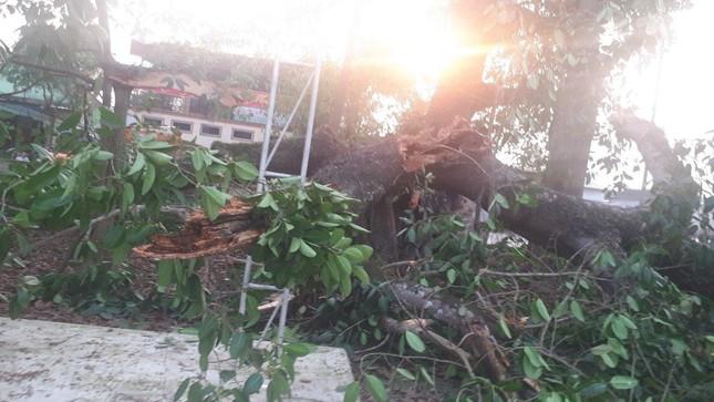 Nhìn gần cây đa hơn 300 tuổi gãy đổ làm bị thương bốn học sinh ở Nghệ An ảnh 9