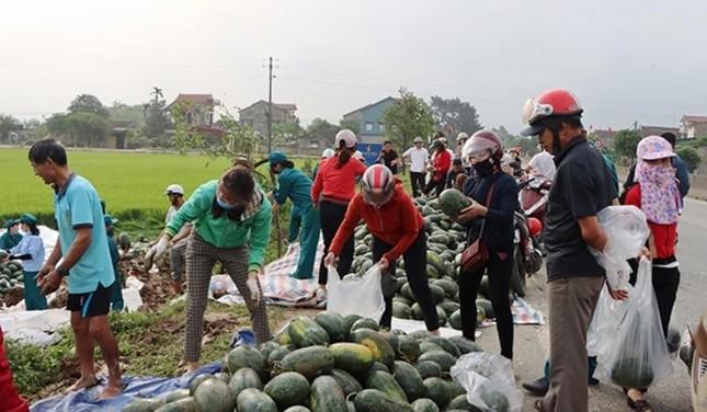 Xe chở gần 30 tấn dưa hấu lật xuống ruộng, người dân thu gom 'giải cứu' giúp tài xế ảnh 2