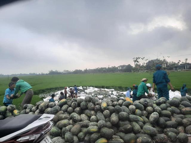 Xe chở gần 30 tấn dưa hấu lật xuống ruộng, người dân thu gom 'giải cứu' giúp tài xế ảnh 1