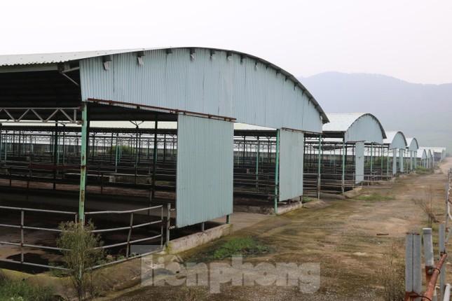 'Hồi sinh' dự án bò Bình Hà: Tỉnh ủy Hà Tĩnh yêu cầu thẩm định tính khả thi ảnh 1