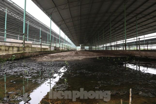 'Hồi sinh' dự án bò Bình Hà: Tỉnh ủy Hà Tĩnh yêu cầu thẩm định tính khả thi ảnh 6