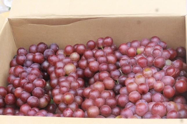 Nghệ An: Bắt giữ 2 tấn hoa quả các loại không rõ nguồn gốc ảnh 1