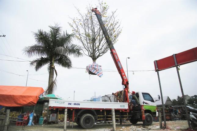 'Cụ mai 'xuống phố được trả giá trăm triệu đồng ở Hà Tĩnh ảnh 2