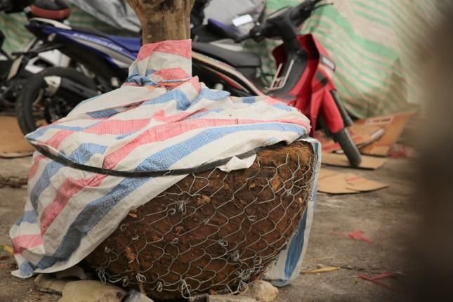 'Cụ mai 'xuống phố được trả giá trăm triệu đồng ở Hà Tĩnh ảnh 9