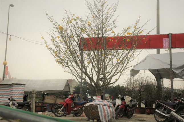 'Cụ mai 'xuống phố được trả giá trăm triệu đồng ở Hà Tĩnh ảnh 10