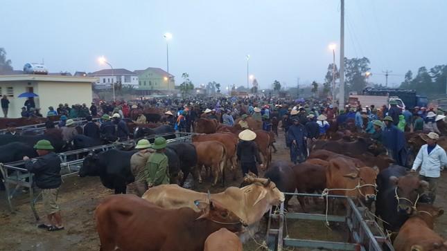 'Tất niên' phiên chợ trâu bò lớn nhất Bắc Trung Bộ ảnh 11