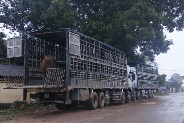 'Tất niên' phiên chợ trâu bò lớn nhất Bắc Trung Bộ ảnh 10