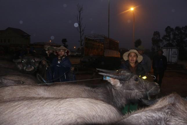 'Tất niên' phiên chợ trâu bò lớn nhất Bắc Trung Bộ ảnh 1