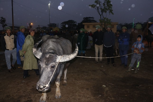 'Tất niên' phiên chợ trâu bò lớn nhất Bắc Trung Bộ ảnh 3