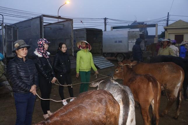 'Tất niên' phiên chợ trâu bò lớn nhất Bắc Trung Bộ ảnh 2