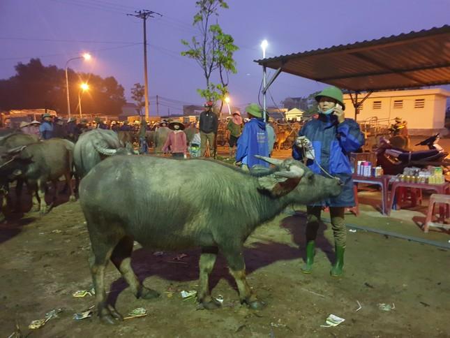 'Tất niên' phiên chợ trâu bò lớn nhất Bắc Trung Bộ ảnh 4