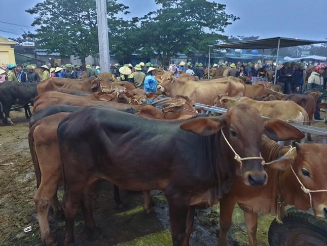 'Tất niên' phiên chợ trâu bò lớn nhất Bắc Trung Bộ ảnh 5