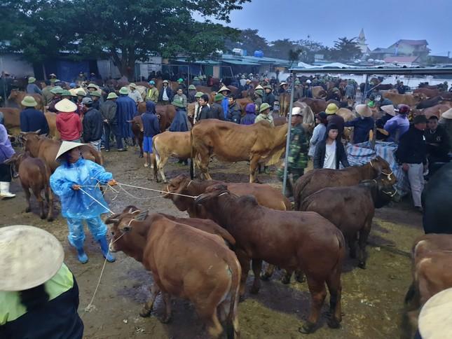 'Tất niên' phiên chợ trâu bò lớn nhất Bắc Trung Bộ ảnh 7