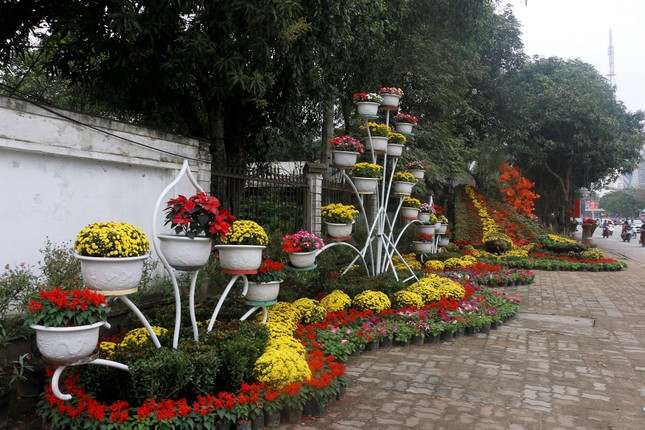 Rực rỡ đường hoa thành phố Vinh những ngày áp tết ảnh 1