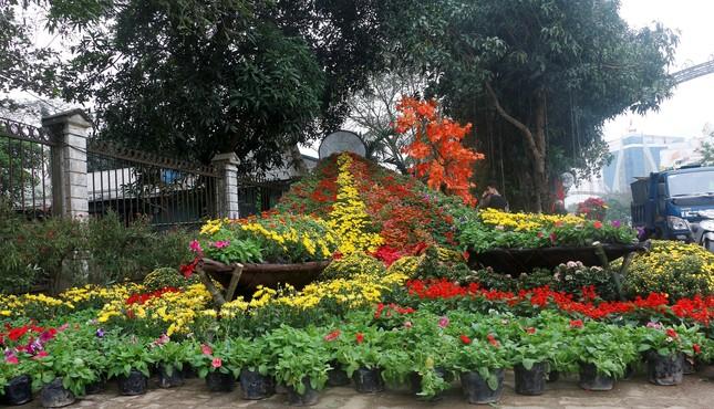Rực rỡ đường hoa thành phố Vinh những ngày áp tết ảnh 2