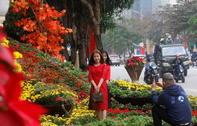 Rực rỡ đường hoa thành phố Vinh những ngày áp tết ảnh 9