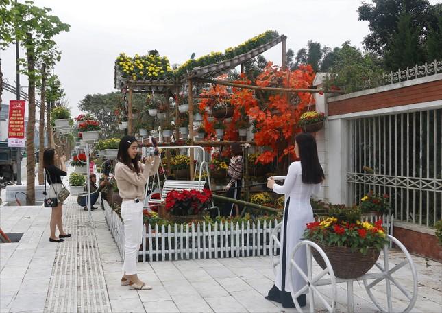 Rực rỡ đường hoa thành phố Vinh những ngày áp tết ảnh 6