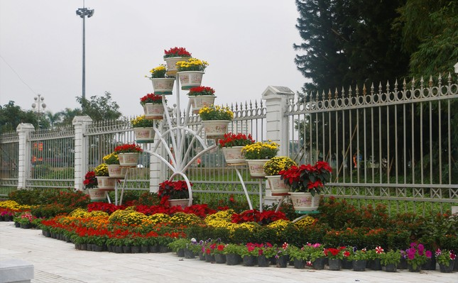 Rực rỡ đường hoa thành phố Vinh những ngày áp tết ảnh 4