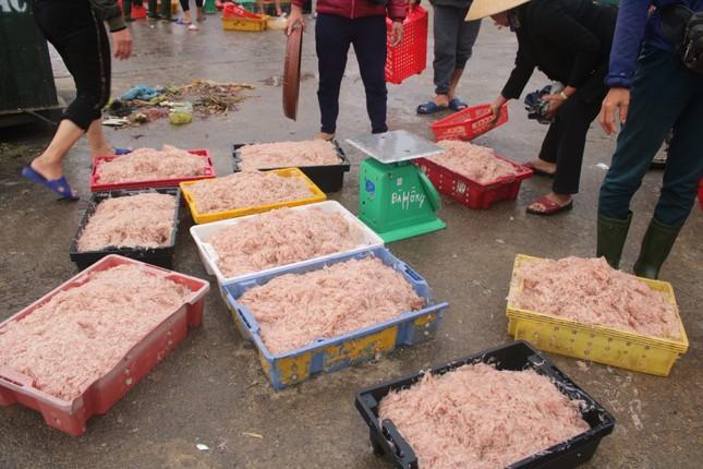 Ngư dân Hà Tĩnh hốt 'lộc trời' đầu năm, kiếm tiền triệu sau vài giờ ra khơi ảnh 9