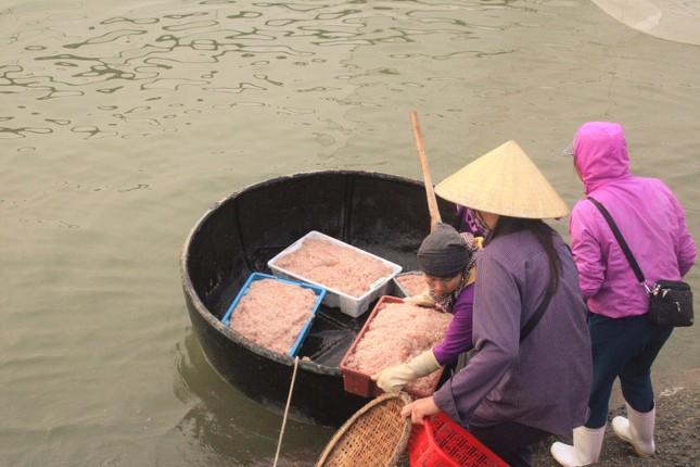 Ngư dân Hà Tĩnh hốt 'lộc trời' đầu năm, kiếm tiền triệu sau vài giờ ra khơi ảnh 10