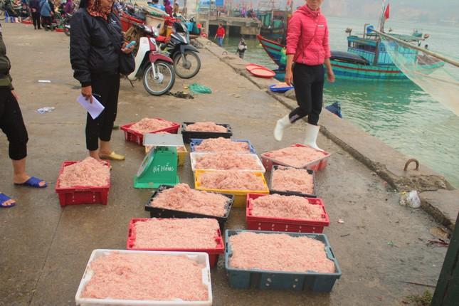 Ngư dân Hà Tĩnh hốt 'lộc trời' đầu năm, kiếm tiền triệu sau vài giờ ra khơi ảnh 6