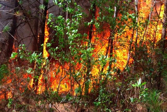 600 người nỗ lực dập lửa cứu rừng cháy lớn ở Nghệ An ảnh 1