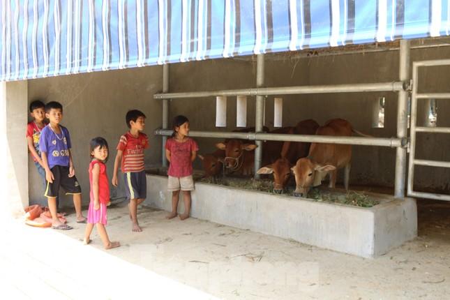 Chi tiết kỹ thuật và đơn giá của 67 chuồng bò 'hạng sang' tại Nghệ An ảnh 4