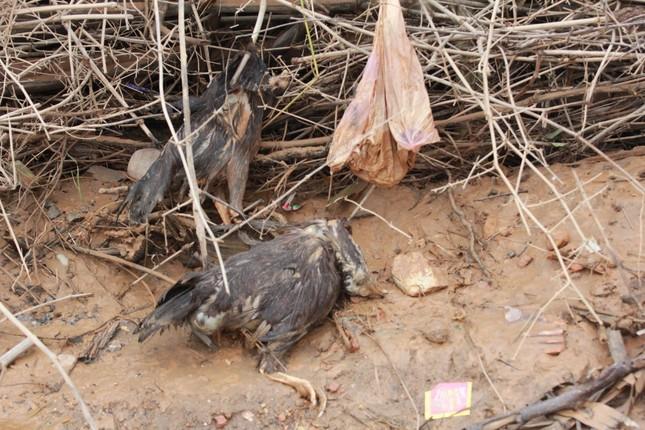 Sau lũ, rác thải tràn ngập, nguy cơ bùng phát dịch bệnh cao ảnh 17