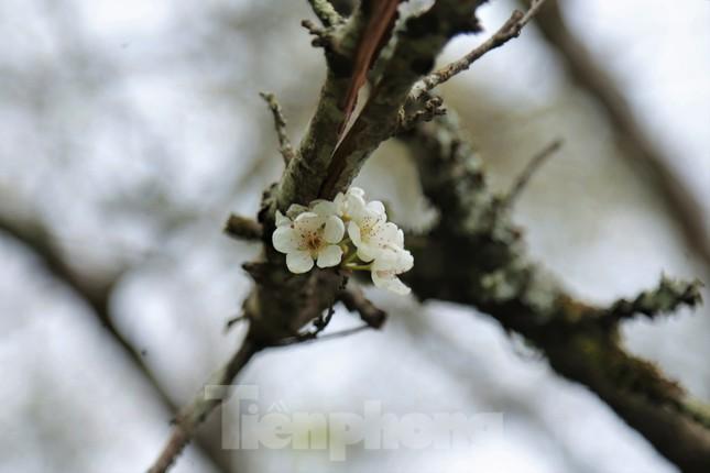 Ngắm hoa đào khoe sắc trên 'cổng trời' mù sương ảnh 9