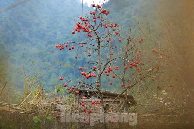 Ngắm hoa đào khoe sắc trên 'cổng trời' mù sương ảnh 14