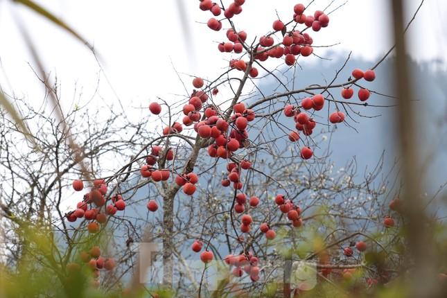 Ngắm hoa đào khoe sắc trên 'cổng trời' mù sương ảnh 12