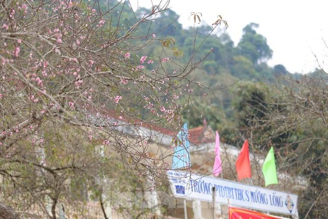 Ngắm hoa đào khoe sắc trên 'cổng trời' mù sương ảnh 6