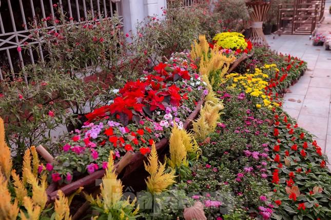 Rực rỡ sắc hoa trên phố đi bộ thành Vinh ngày giáp Tết ảnh 7