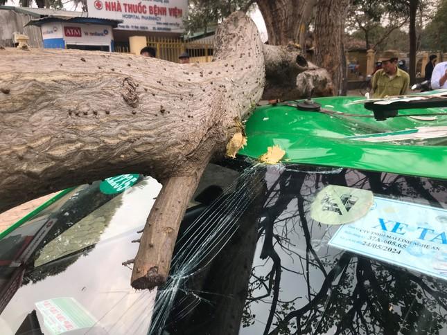 Kinh hoàng cành cây bất ngờ đè bẹp dúm taxi ảnh 1
