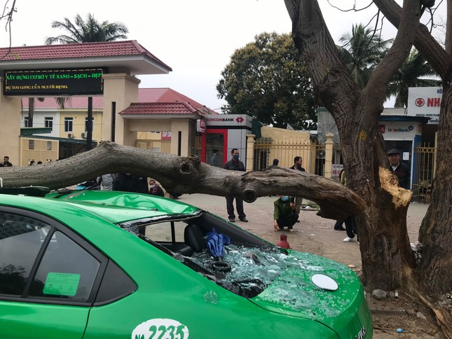 Kinh hoàng cành cây bất ngờ đè bẹp dúm taxi ảnh 4