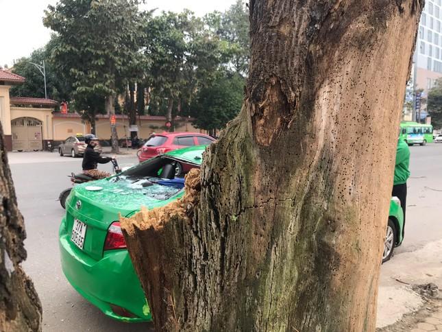 Kinh hoàng cành cây bất ngờ đè bẹp dúm taxi ảnh 7