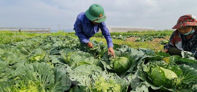 Nghệ An: Rau ế ẩm, nông dân mang về... cho bò ăn ảnh 1