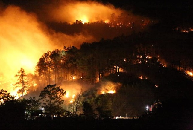 Lão nông bị phạt 90 triệu vì làm cháy 4.900m2 rừng thông ảnh 1