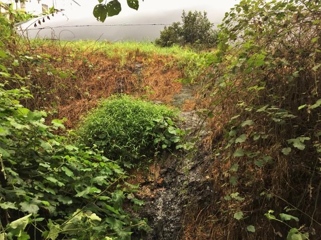 Nơm nớp lo chất thải từ trại lợn 'bức tử' dòng nước đầu nguồn ảnh 4