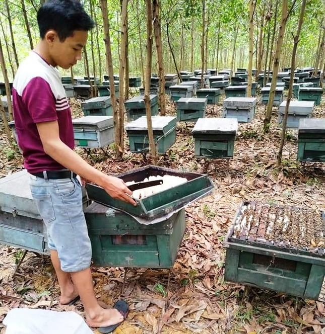 Công an vào cuộc vụ hơn 200 tổ ong chết đồng loạt nghi bị đầu độc ảnh 1